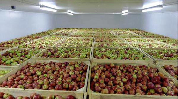 bảo quản trái cây trong kho lạnh