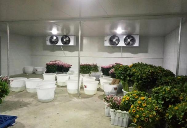 kho lạnh bảo quản hoa tươi 1