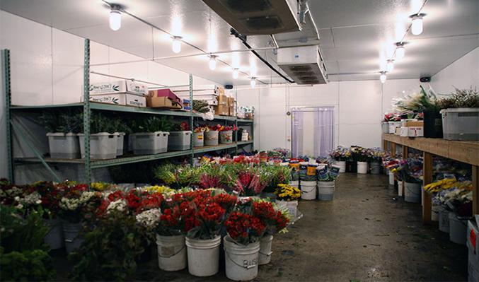 kho lạnh bảo quản hoa tươi 2