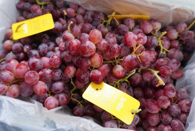 kho lạnh bảo quản trái cây 5