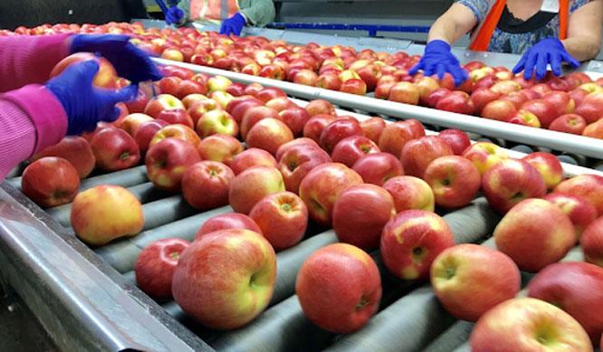 kho lạnh bảo quản trái cây